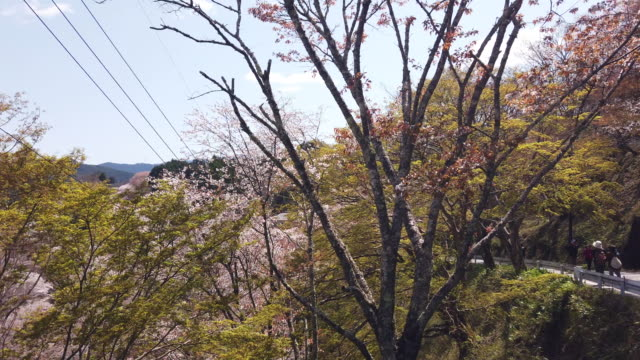pan left, cherry blossoms in rural japan - satoyama scenery stock videos & royalty-free footage
