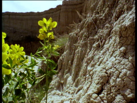 pan left from dried mud bank to yellow flowers in badlands of south dakota - badlands national park stock videos & royalty-free footage