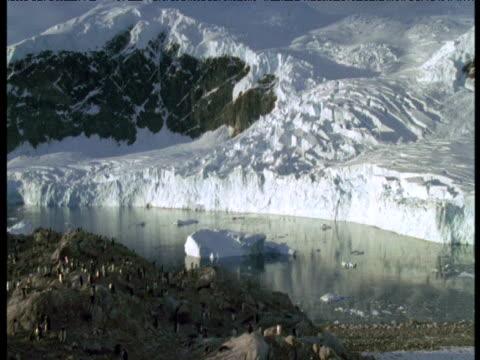 vidéos et rushes de pan left from ice to gentoo penguin colony, antarctica - colony
