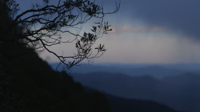 Pan left onto foliage silhouetted against Australia's Blue Mountains in New South Wales.