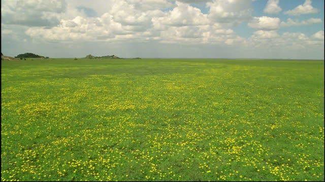 Pan left over green steppe with small yellow flowers\n