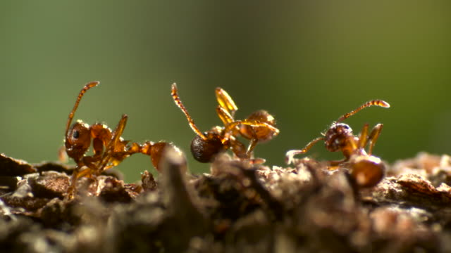 pan left over line of dead ants. - formica video stock e b–roll