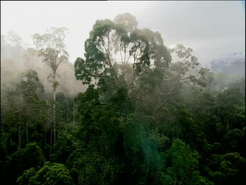 Pan left over misty tree tops, Congo