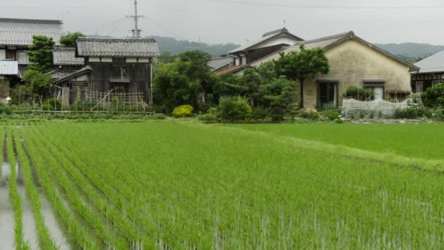 pan left over paddy field, japan. - takashima shiga stock videos & royalty-free footage