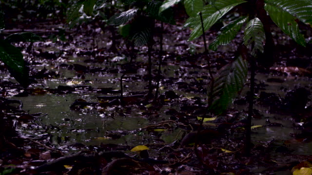 pan left over rain falling in forest, malaysia. - wet stock videos & royalty-free footage