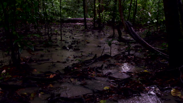 pan left over rain falling in forest, malaysia. - monsoon stock videos & royalty-free footage