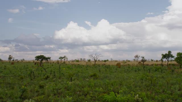 pan left over termite mounds in grassland. - cerrado stock videos & royalty-free footage