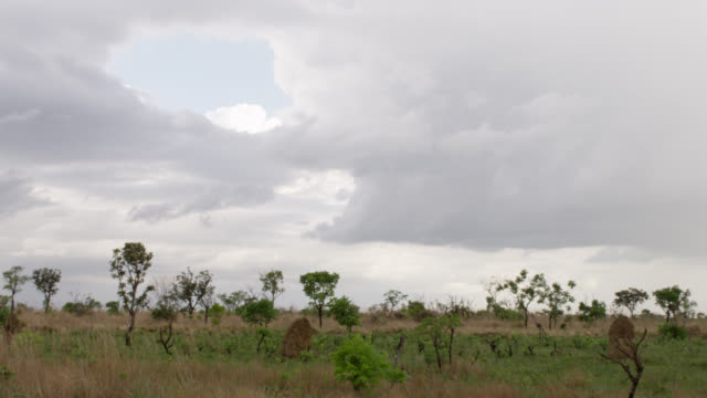 pan left over termite mounds in grassland. - plain stock videos & royalty-free footage