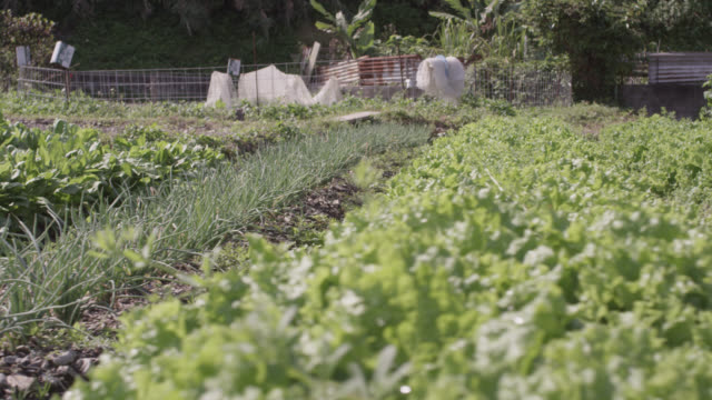 pan left over vegetables growing in allotment. japan. - community garden stock videos & royalty-free footage