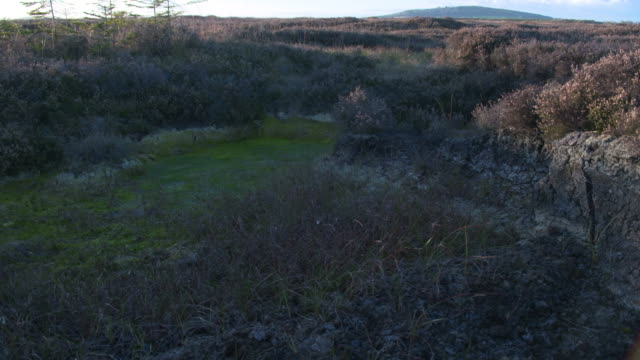 pan left shot from a layer of peat with common heathers to a pit with moss - pinaceae stock videos & royalty-free footage