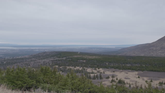 pan left shot of a forested landscape in the arctic national wildlife refuge - arctic national wildlife refuge stock videos & royalty-free footage