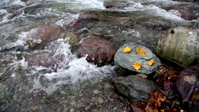 pan left shot of golden leaves on rocks in water in river. - mcdonald creek stock-videos und b-roll-filmmaterial