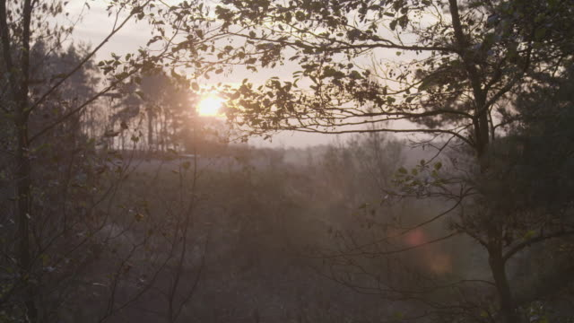 pan left shot of the autumn forest at sunrise - bush stock videos & royalty-free footage
