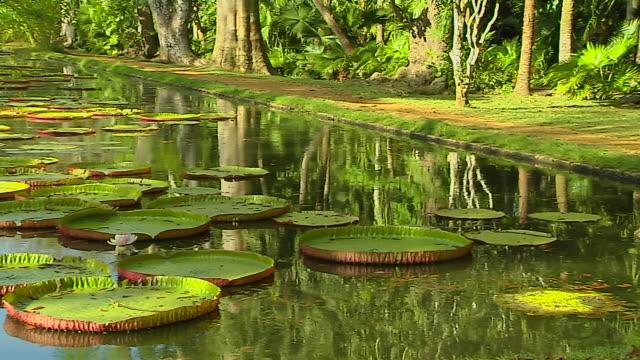 Pan Left Shot Water Lily Pamplemousse Port Louis Mauritius