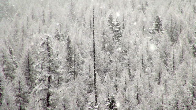 pan left telephoto shot of snow covered trees in mountains during heavy puffy snowflake snow storm. - glacier national park us stock videos and b-roll footage