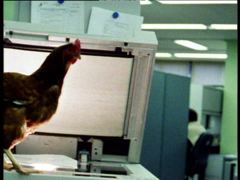 pan left to chicken on photocopier in office - chicken bird stock videos & royalty-free footage