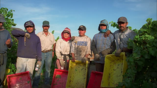 vídeos de stock, filmes e b-roll de pan left to right as fruit pickers in californian vineyard hold plastic trays and look into camera available in hd. - migrant worker