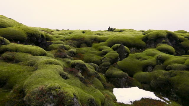 Pan Left to Right: View of the Green Moss on Rocks
