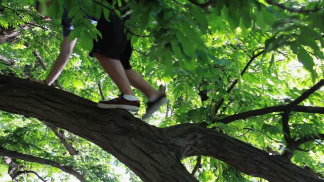 vidéos et rushes de pan left to young man climbing a tree and enjoying the view - seulement des jeunes hommes