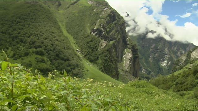 pan left valley of flowers uttarakhand - valley stock videos & royalty-free footage
