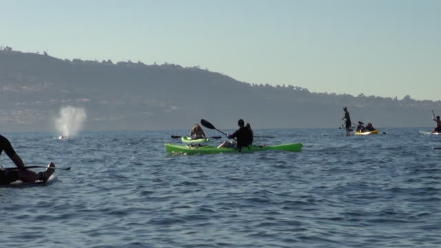pan: man kayaking comes closer to whale - cetacea stock videos & royalty-free footage