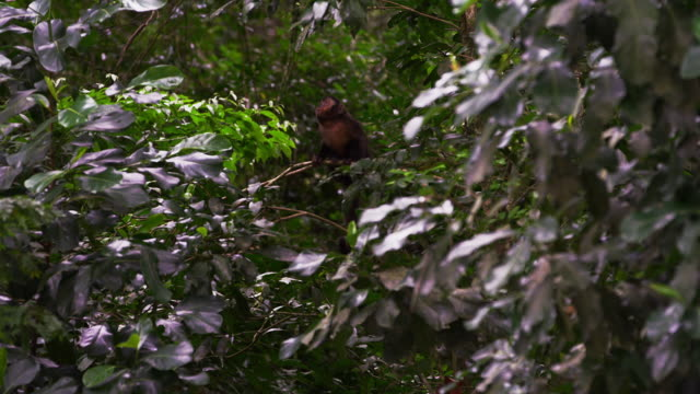 pan of a jungle of foliage and trees. - 2013 stock videos & royalty-free footage