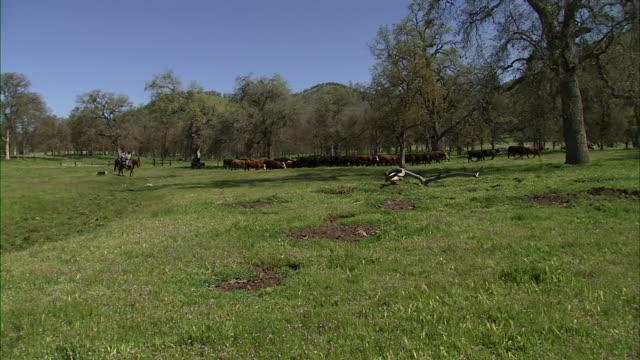 pan of cattle ranch. - cattle点の映像素材/bロール