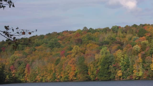 pan of fall foliage trees showing colors during autumn in the hudson valley - hudson valley stock videos and b-roll footage