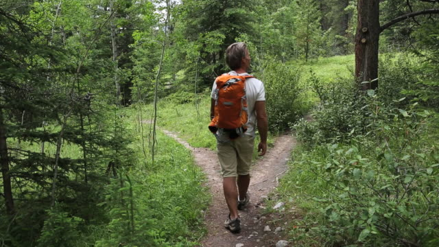pan of hiker walking to trail fork, choosing path - scegliere video stock e b–roll