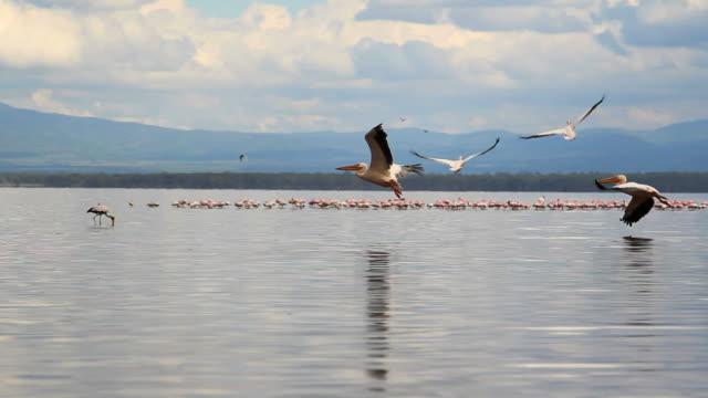 Pan of Lake Nakuru in Kenya.