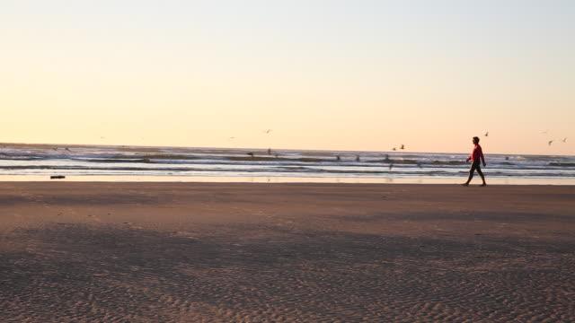 Pan of man running after seagulls on beach, sunset
