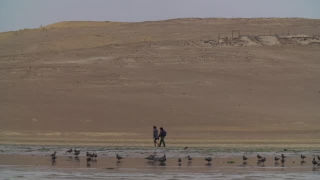 Pan of People walk along Peruvian Desert Coastline + Birds