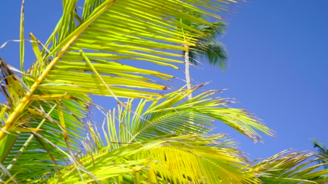 pan of the fronds of several palm trees - blattfiedern stock-videos und b-roll-filmmaterial