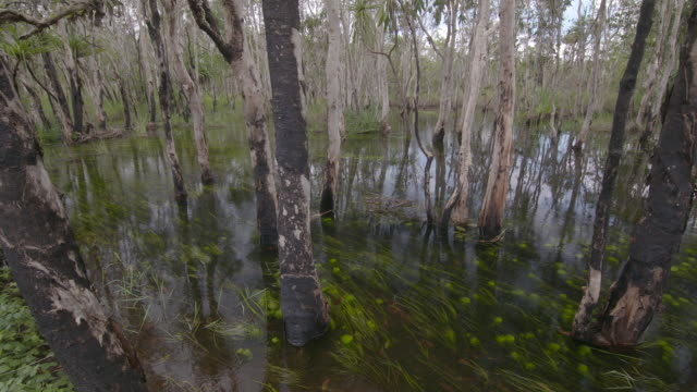 Pan of wetland swamp trees and scrub growing in standing water / Billabong swamp pool surrounded by scrub and trees fishing line droppped into water...