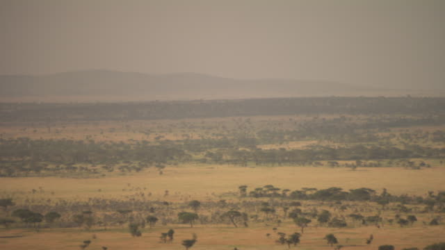 pan onto a wide shot of a herd of wildebeest on grassy plains, tanzania. - panoramic stock videos & royalty-free footage