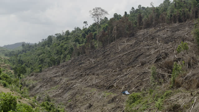 """pan over deforested landscape, sumatra. - """"bbc natural history"""" stock videos & royalty-free footage"""