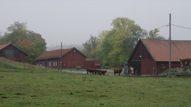 stockvideo's en b-roll-footage met pan over farm to cows next to barn - boerderijschuur