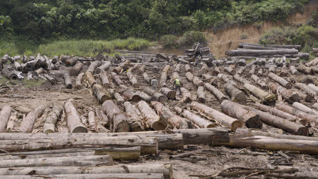 pan over felled trees, borneo. - audio available stock videos & royalty-free footage