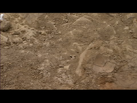 pan over fossil of dinosaur bone unearthed at excavation site in hell creek formation / montana - ancient stock videos & royalty-free footage