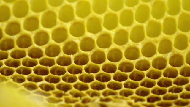 cu pan over honeycomb - naturligt mönster bildbanksvideor och videomaterial från bakom kulisserna