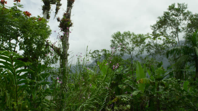 Pan over jungle flowers and foliage.