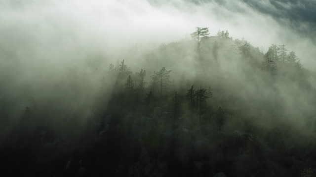 Pan Over Misty Forest Landscape