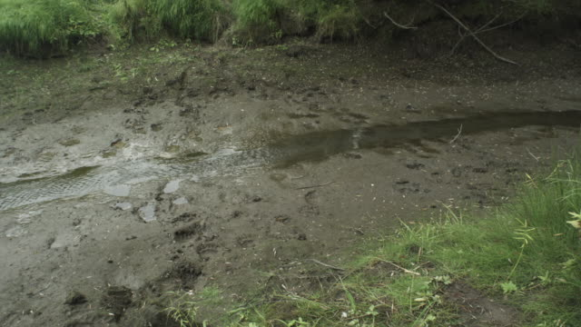 pan over river and bear paw prints - paw print stock videos & royalty-free footage
