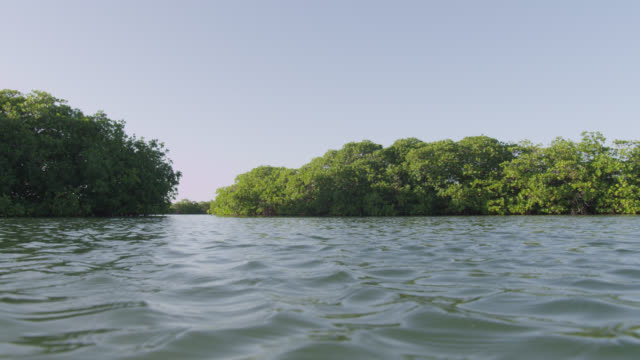 pan over sea and mangrove trees, belize - albero tropicale video stock e b–roll
