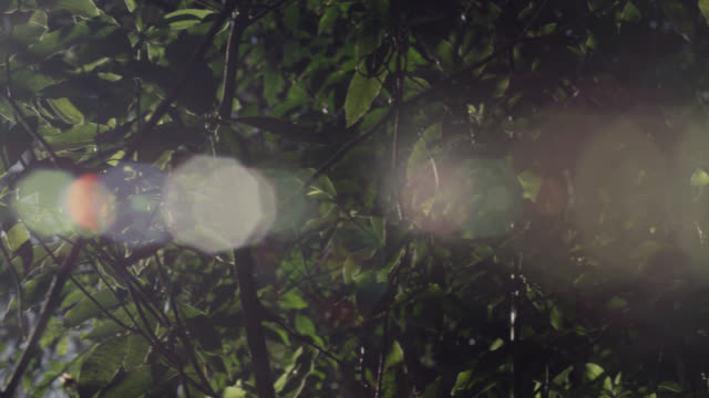 pan over sun shining through forest branches, australia - branch stock videos & royalty-free footage