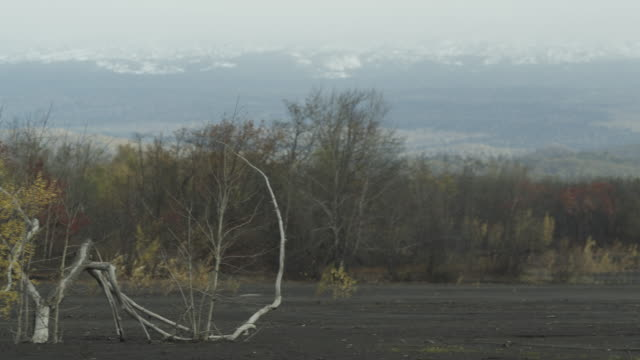 pan over tree buried under ash, alaska, 2009 - ash tree stock videos & royalty-free footage