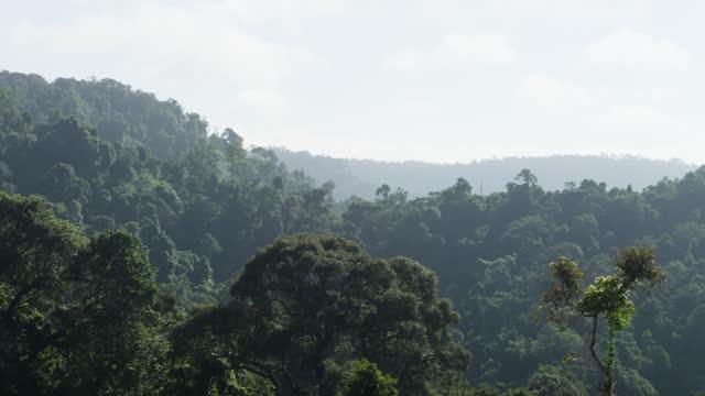 pan over tree canopy, cambodia. - tree canopy stock videos & royalty-free footage