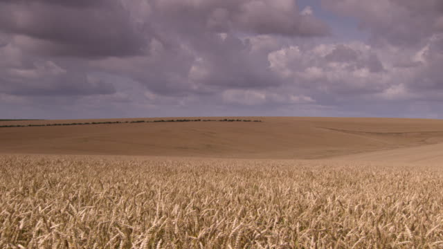 Pan over wheat fields stretching into the distance in the Somme region, Hauts-de-France.