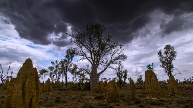 pan past termite mounds, australia. - australia stock videos & royalty-free footage