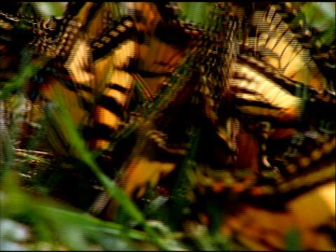 pan right across butterflies in grass, kentucky - wirbelloses tier stock-videos und b-roll-filmmaterial